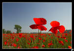 poppy field 02 by cicciojus