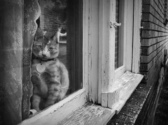Alley Cat by er0k