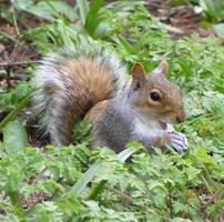 Cute squirrel by Vitaloverdose