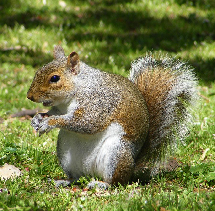 cute squirrel 5 by Vitaloverdose on deviantART