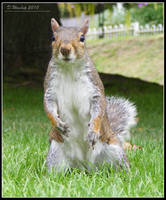 Can i haz a peanut? by Vitaloverdose