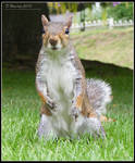 Can i haz a peanut?