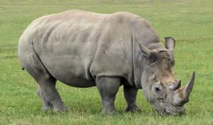 Rhino by Vitaloverdose