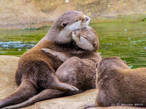 Otter lovers