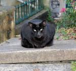 Evil cat !!!! by Vitaloverdose