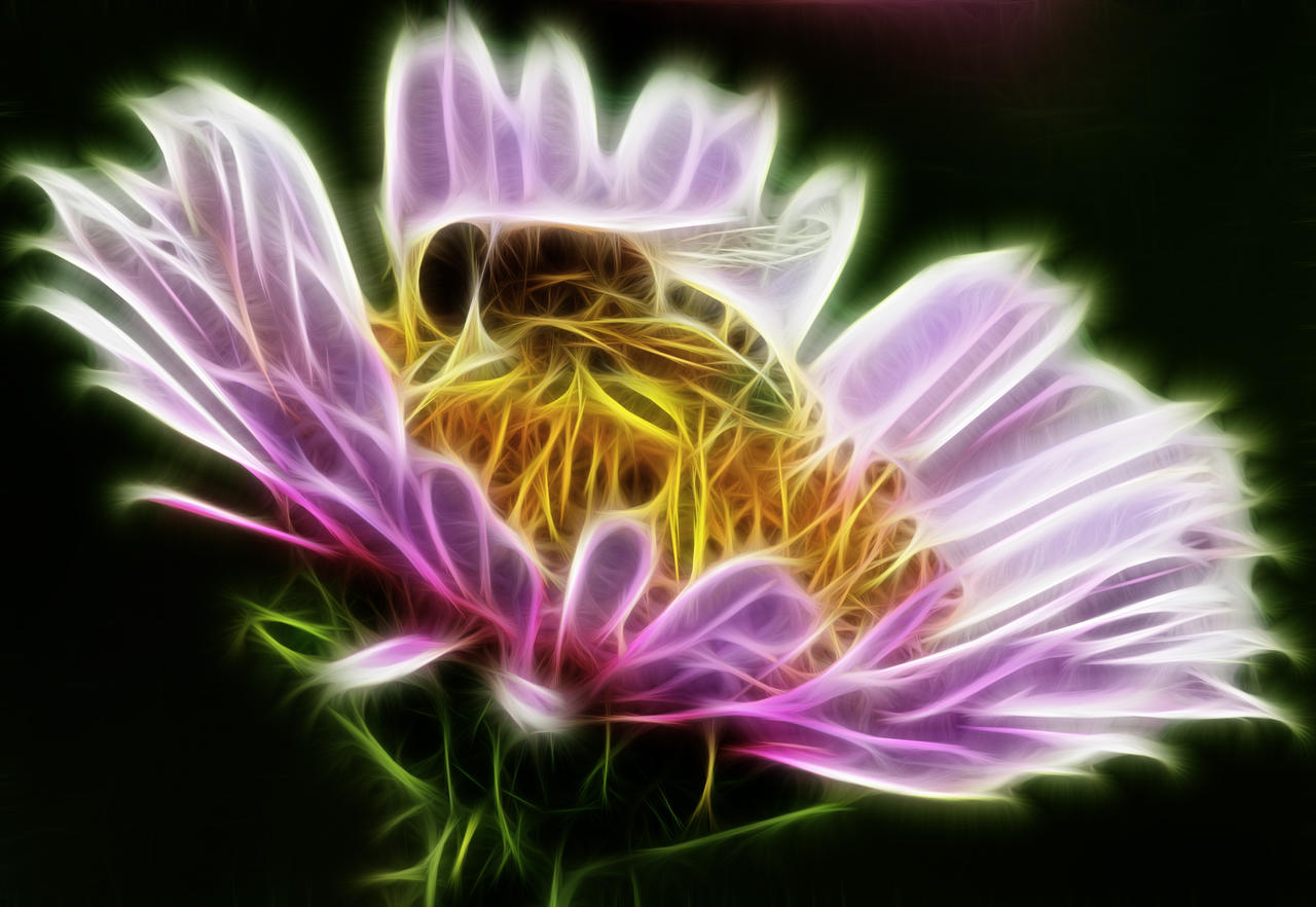 Hover fly Fract