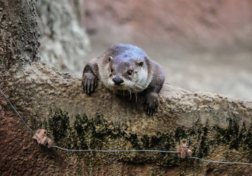 The curious Otter by Vitaloverdose