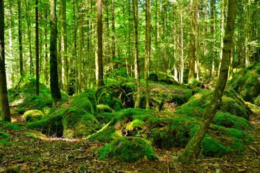 Green underwoods