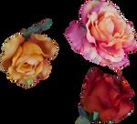 Rose #7