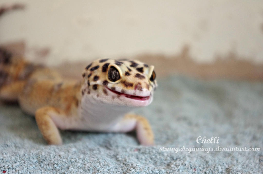 Happy gecko by strangebeginnings