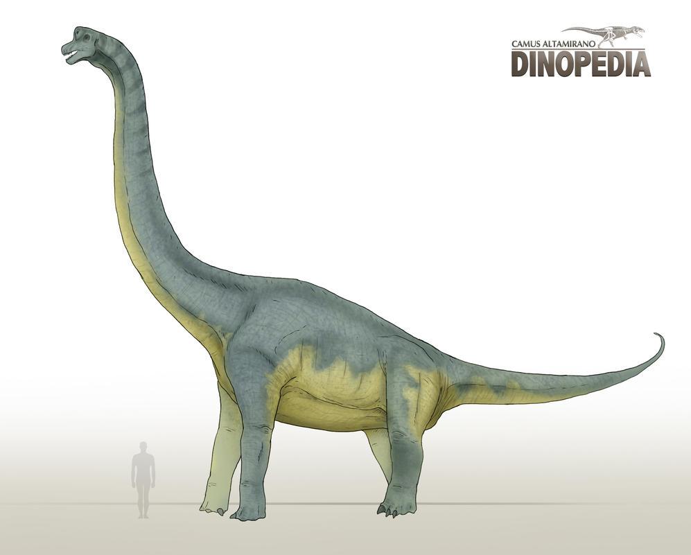 Brachiosaurus altithorax by CamusAltamirano