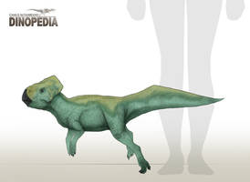 Graciliceratops mongoliensis by CamusAltamirano