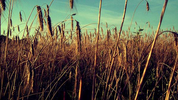 Field 3 by Peth94