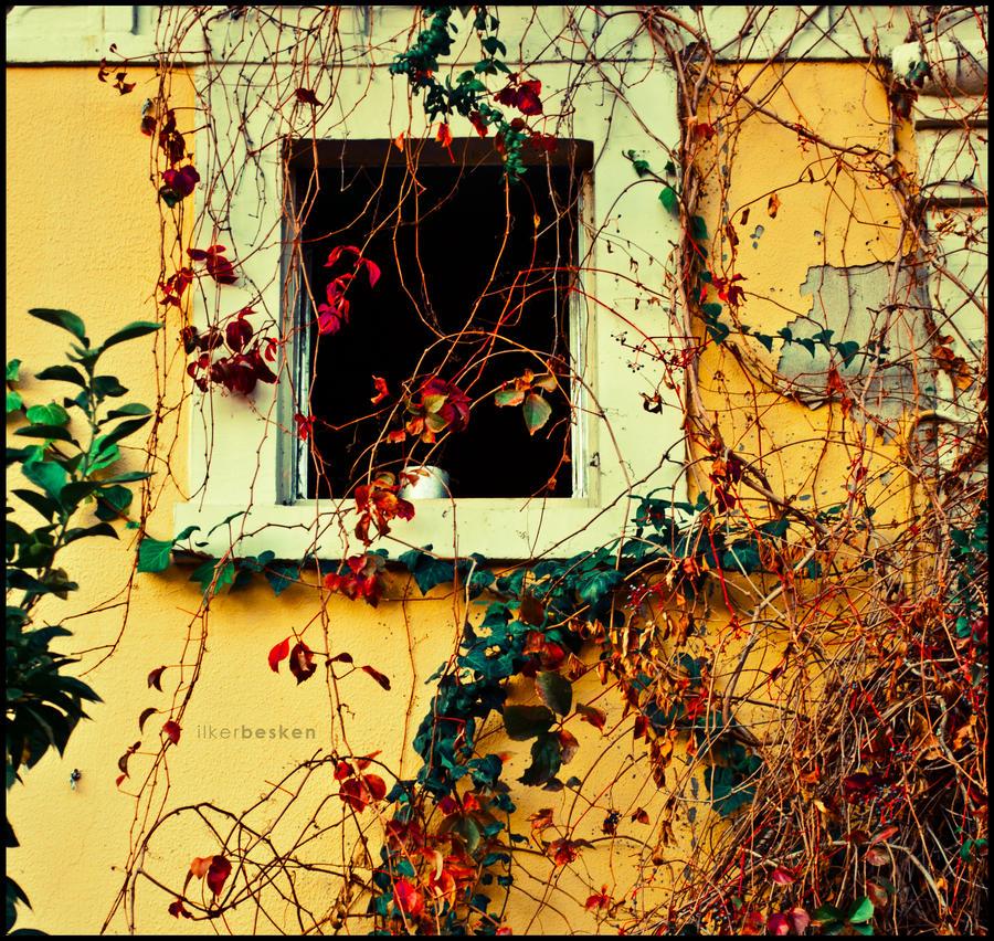 Prozori koji govore Windows_no_4_by_ilkerbesken-d35xwco