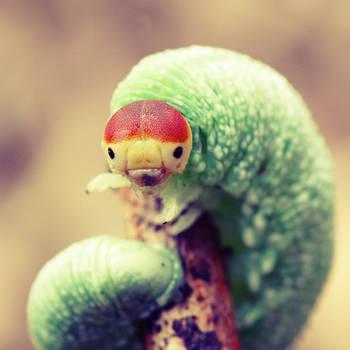 Very Happy Caterpillar by Wysseri