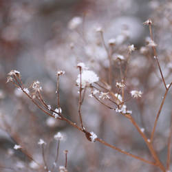 Frozen Arms by Wysseri