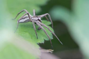 Nursery Web by Wysseri