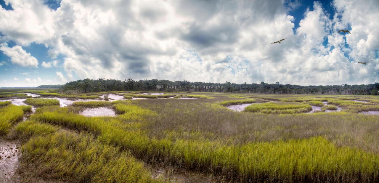 Marsh Panorama by Locopelli