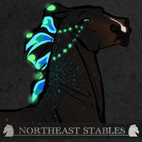 A2525 ES NorthernLights by NorthEast-Stables