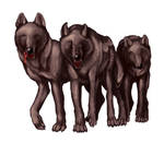 Shadowstep Wolves