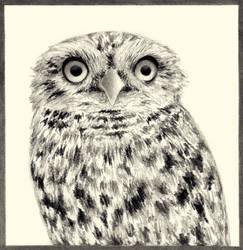 Big eyes by steyfi