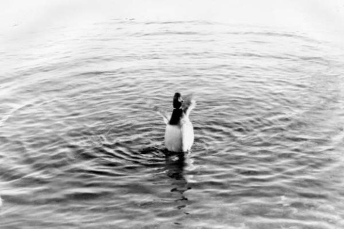 Quack by Jenzie
