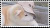shiba inu stamp #2