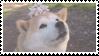 shiba inu stamp #8