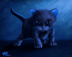 Bluish Kitten