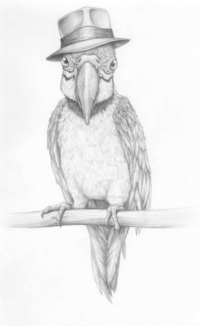 Dapper Parrot by Fyrisvellir