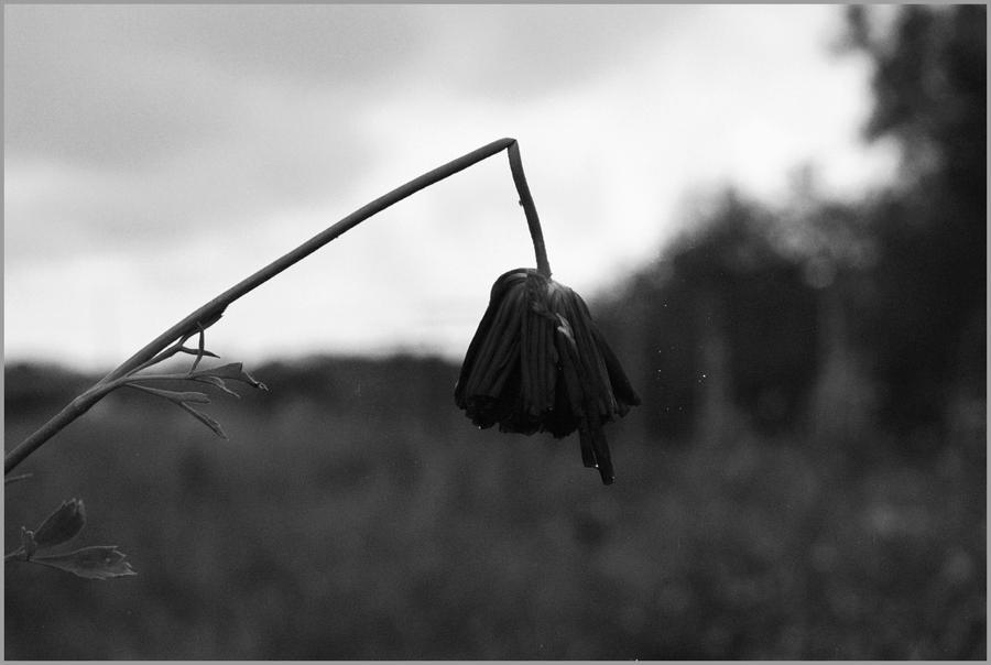 Dead Flower By SneakOne