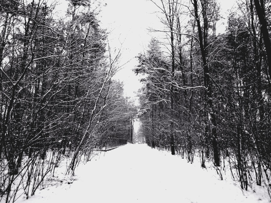 Winter forest (black and white) by Banjis on DeviantArt