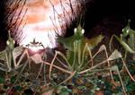 mantis 5