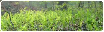 [FREE TO USE] Spring Fern - Rectangular