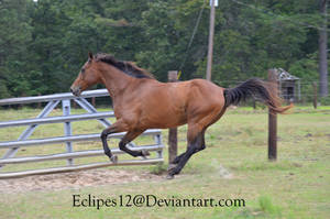 Bay horse running by eclipes12