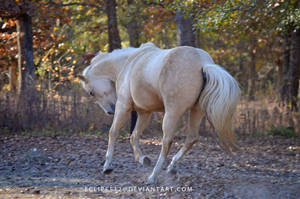 Palomino mare by eclipes12