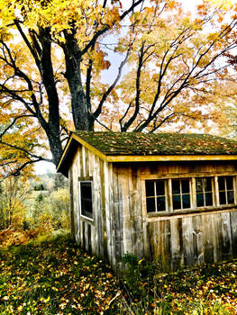 The shed in the forest