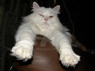 Kiss my fluffy paws