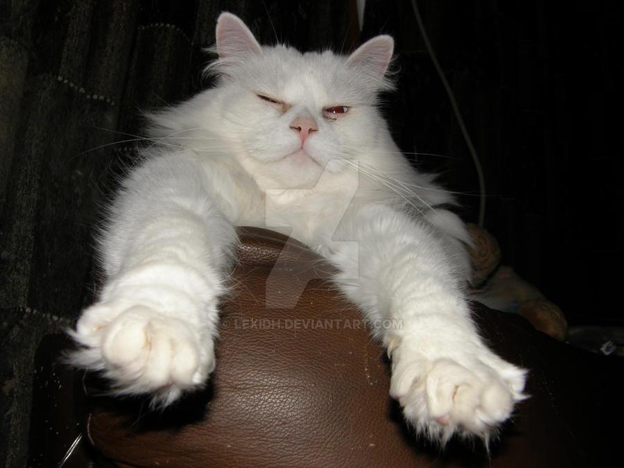 Kiss my fluffy paws by lexidh