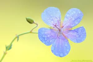 Flower by patrykcyk