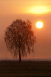 Sunrise by patrykcyk