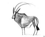 Sable Bull Sketch