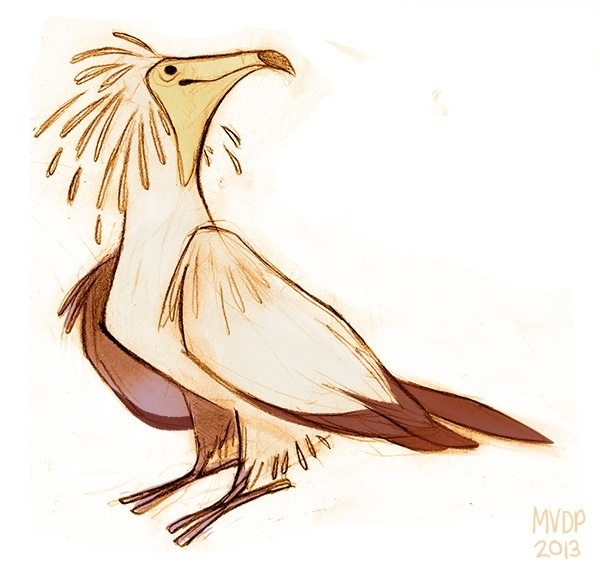 egyptian vulture drawing - photo #5