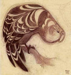 Kakapo Sketch by sketchinthoughts