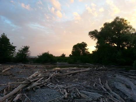 The Driftwood Beach