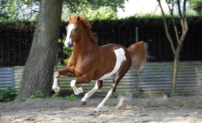 Horse Cantering Cantering horse boy