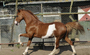 cantering horse - Boy #2