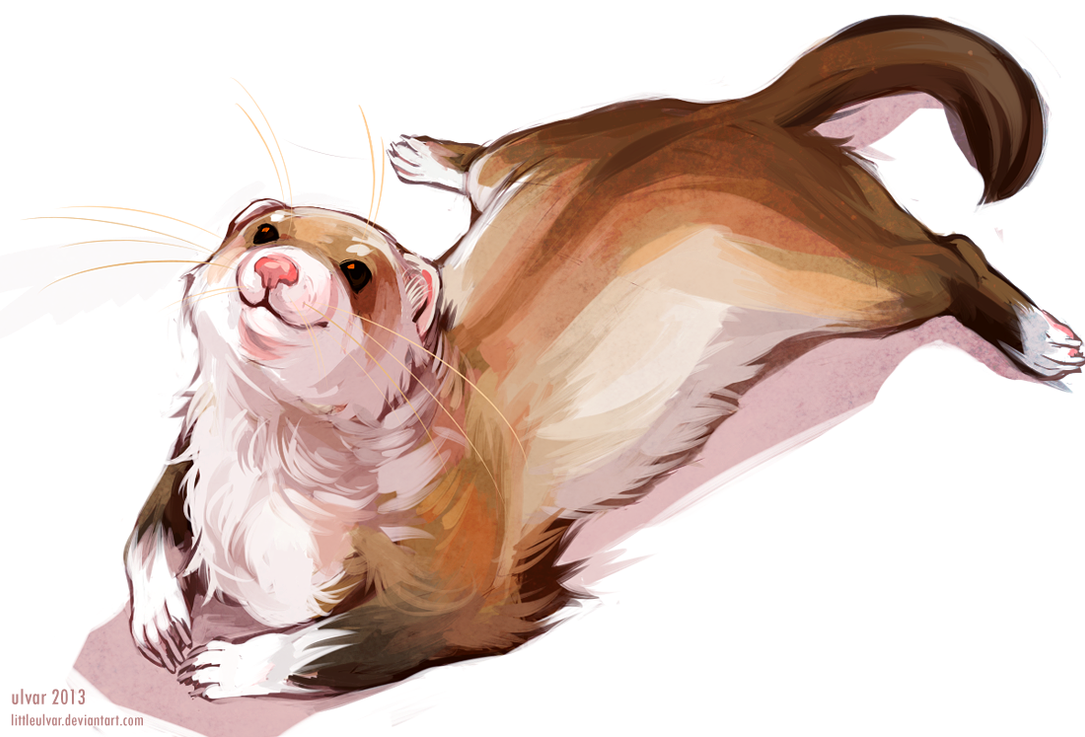 ferret by littleulvar