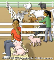 Petting Zoo - Image 2