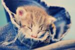 Sleepy Jeans